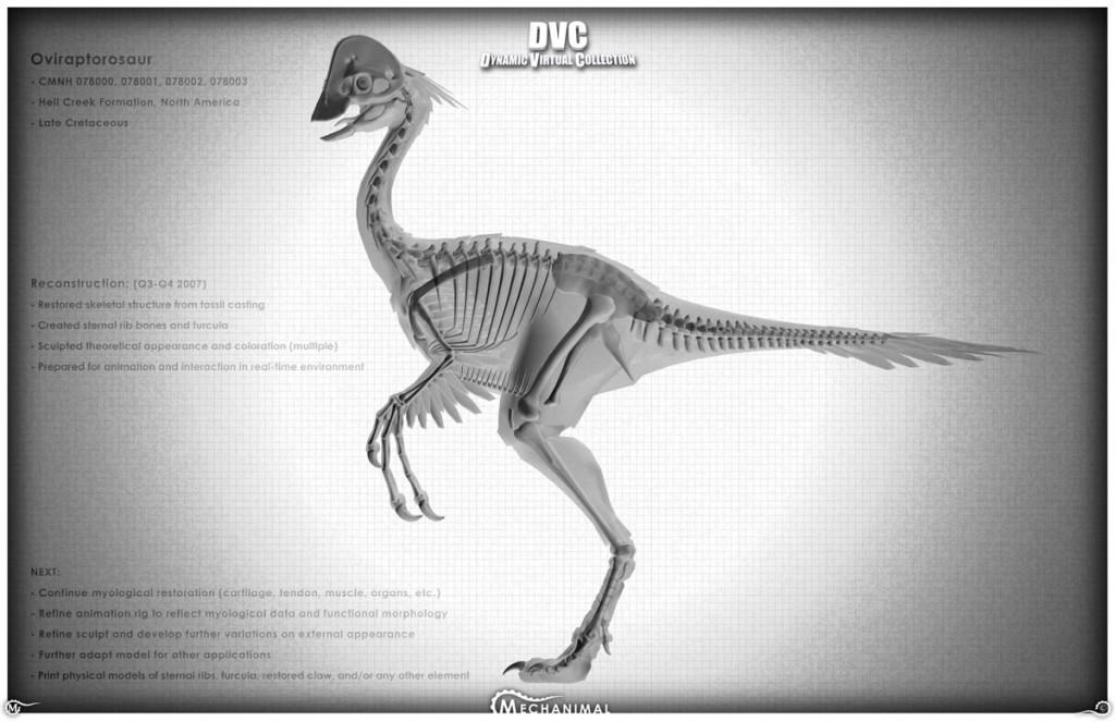 DVC_BigO_MyoTestXray02 copy