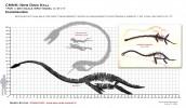 48th[1].Elasmosaurus